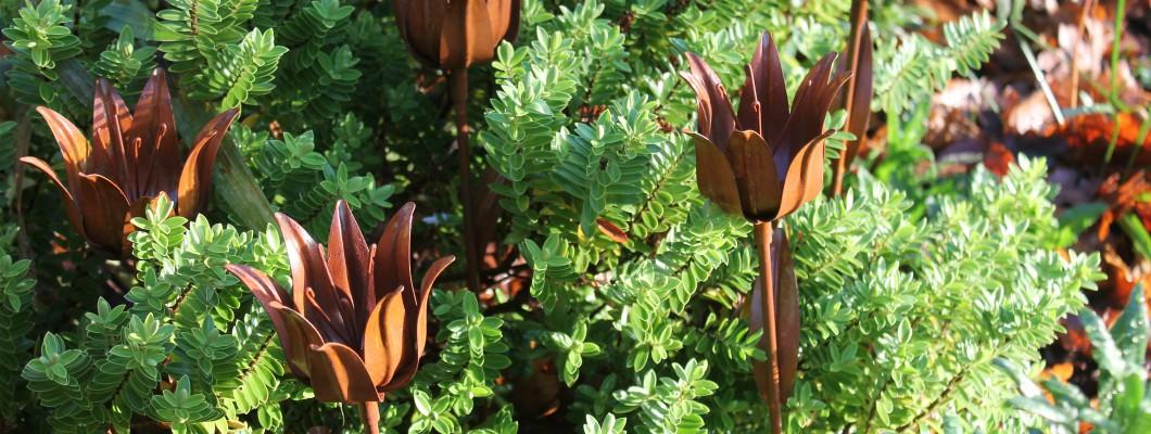 Rustic Flowers in the garden