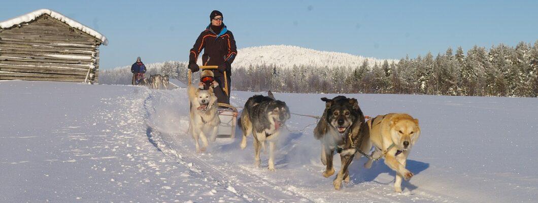 Artic Adventure in Finland